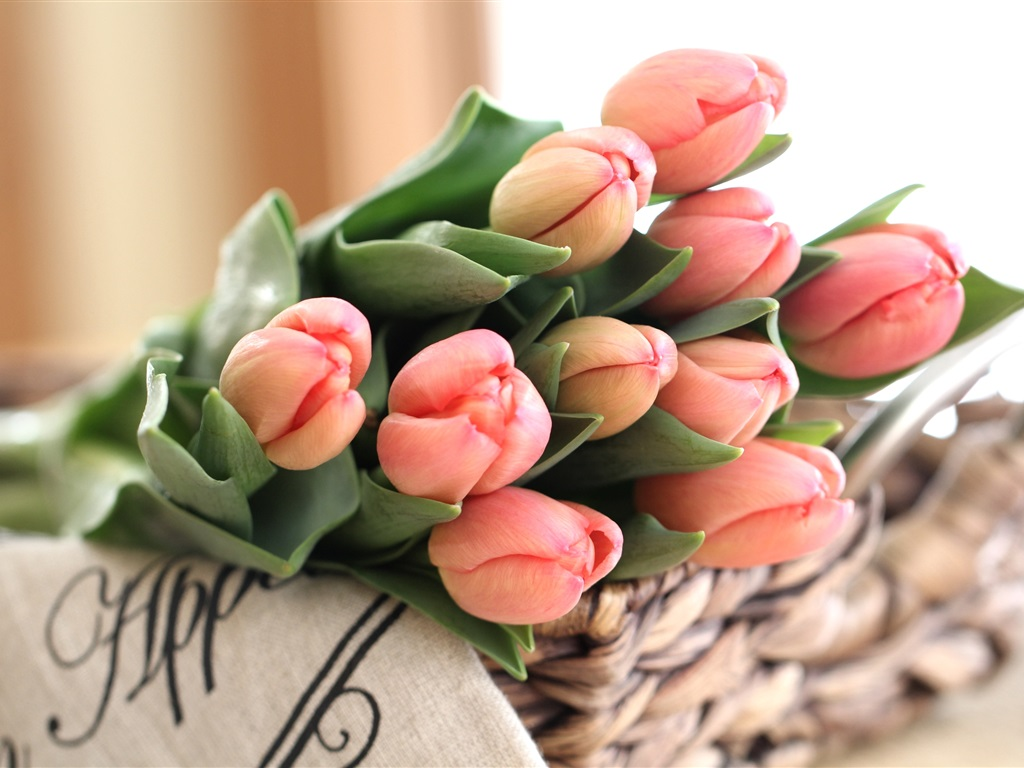 Pink tulips bouquet flower buds 1024x768